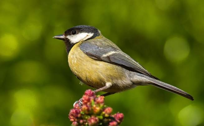 Great tits are killing birds and eating their brains. Climate change may be to blame. https://t.co/q2RoQflnIk