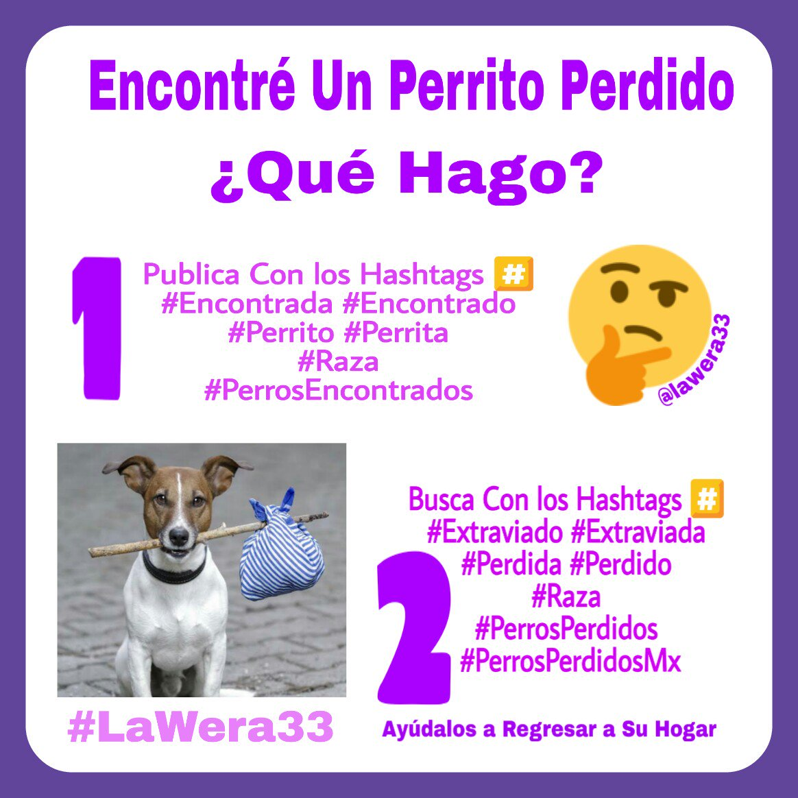 LaWera33�Perros Encontrados México's photo on #QueNuncaMeFalte