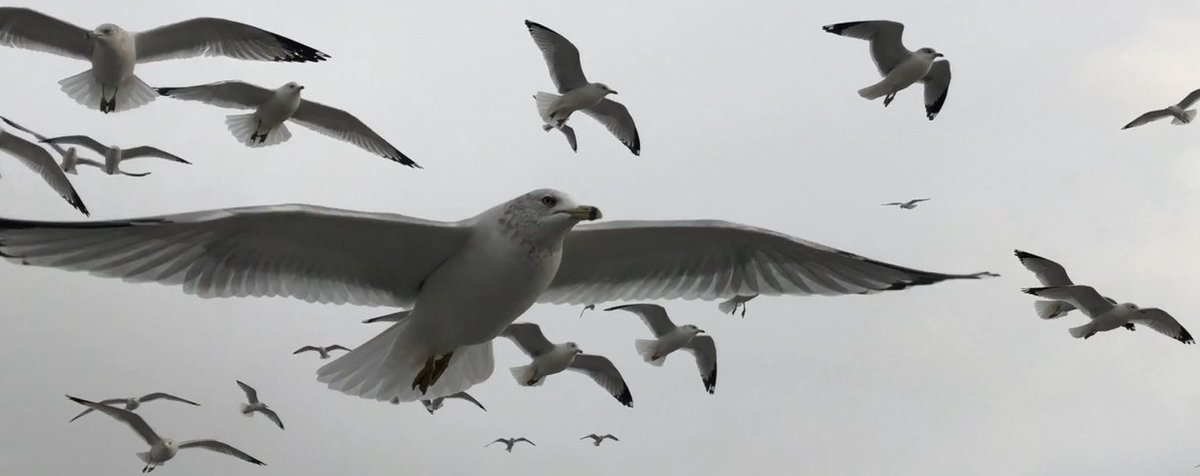 seagulls - Twitter Search