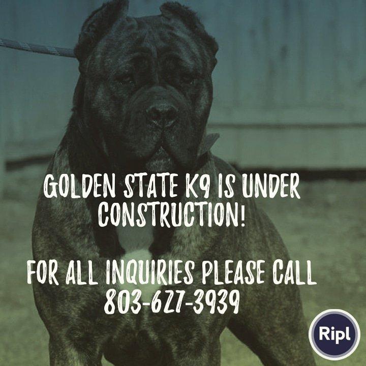 Golden State K9's photo on #powerofsuccess
