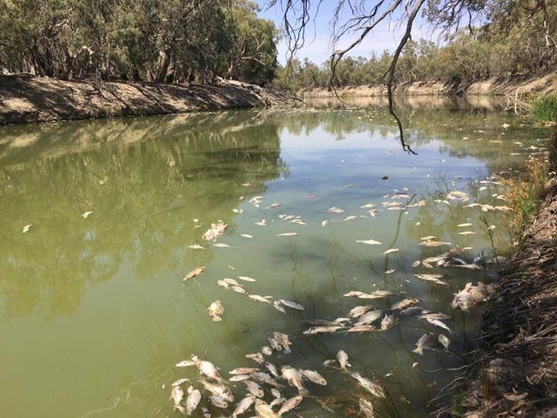 NSWALC's photo on darling river