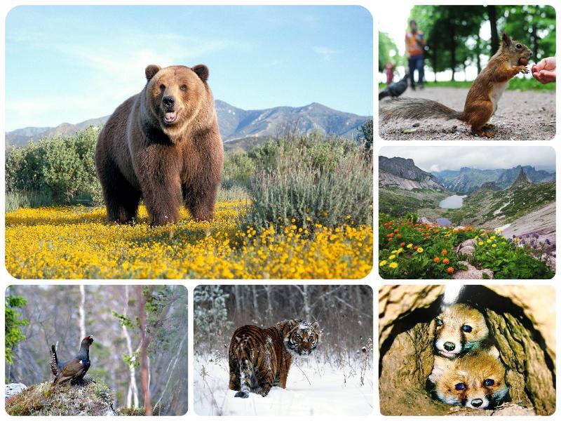 Картинки ко дню заповедников и национальных парков