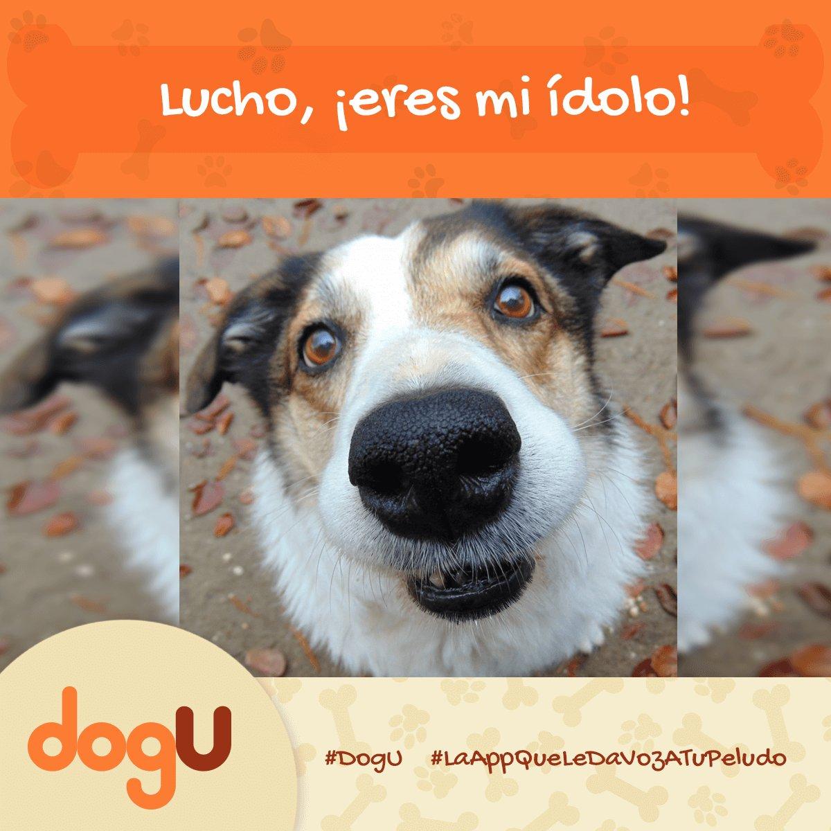 Sé la persona que tu perro cree que eres. #YoSoyUnDogULover #DogU #LaAppQueLeDaVozATuPeludo #DescárgalaYa https://t.co/DkaRQn71rc https://t.co/AzaAevEOWQ