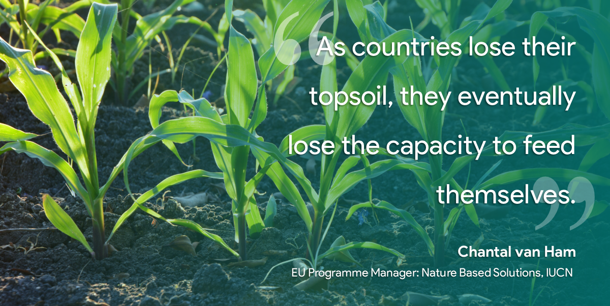 #ClimateChange & #urbanization are destroying soil rapidly.  Why should we care? Because #soil #biodiversity is one of #nature's forgotten solutions in the fight against #climate.  More from (@IUCNBrussels) on @TNatureOfCities: https://t.co/UpBgh4EqnD #TheForgottenSolution