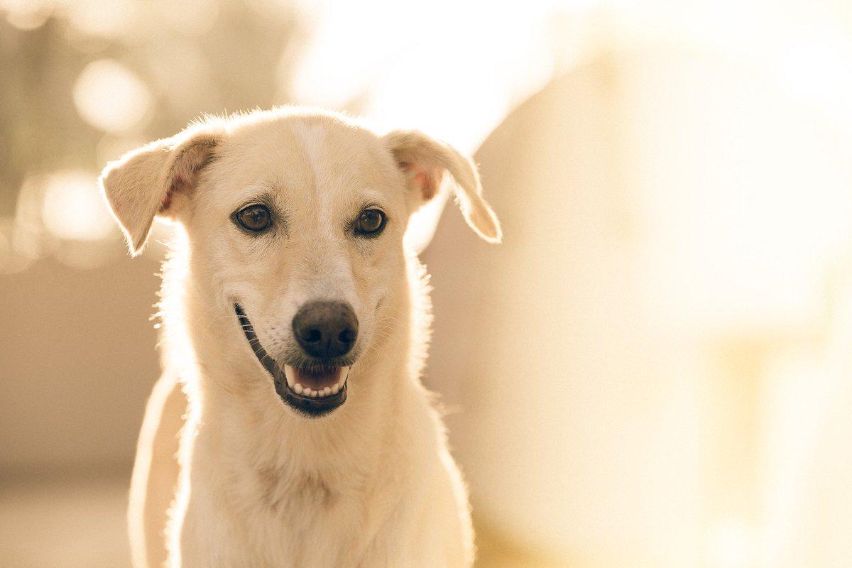 Smile it&#39;s Friday! #dog #FridayFeeling #FridayMotivation #happy #dogs #cute #awww<br>http://pic.twitter.com/58bkCVj8Fz