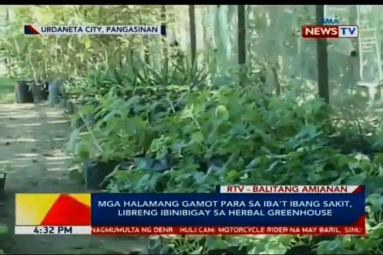 Patok ngayon mga taga Urdaneta City Pangasinan ang herbal