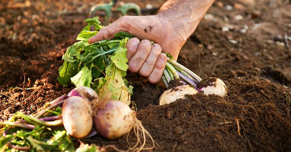 Seeds&Chips's photo on giacomo