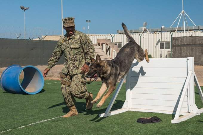 Partners training together! @USNavy Petty Officer 2nd Class Christopher Henderson and his partner Mark 🐶 train on an agility course on Camp Lemonnier, Djibouti. #KnowYourMil Photo