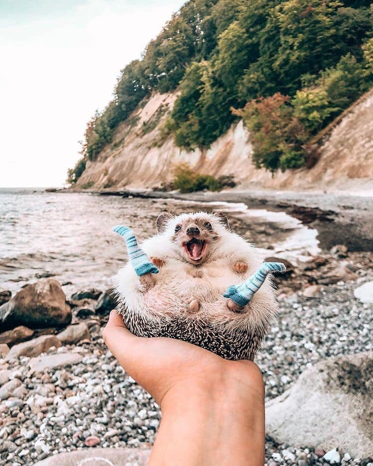 In case you're having a bad day, here's a hedgehog wearing socks #FridayReads #fun<br>http://pic.twitter.com/CS1G21fFH3