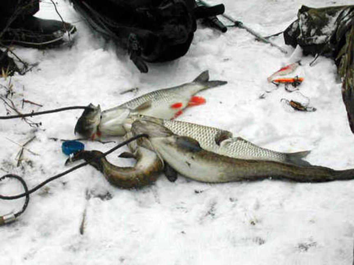 Ловля рыбы зимой на оке