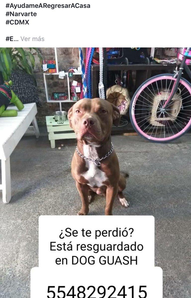 #BuenViernes #perritoencontrado en #Narvarte  pls rt<br>http://pic.twitter.com/qfi2Xqqgo7
