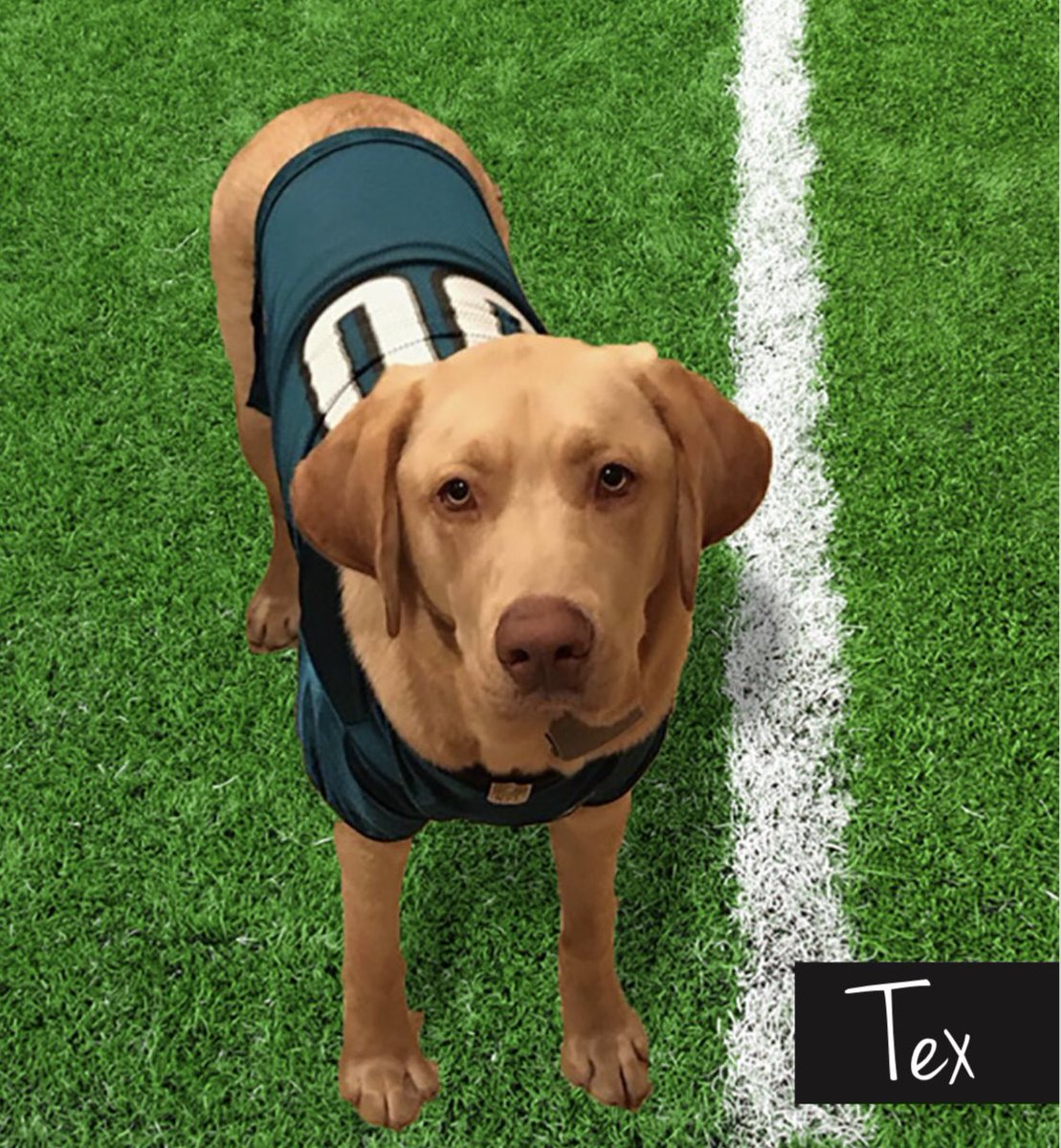 FLY EAGLES FLY! We are proud to care for Coach Doug Pederson's fur-child Tex! Best of luck Sunday! #flyeaglesfly  #LIIIherewecome #GOBIRDS #fox29goodday <br>http://pic.twitter.com/NE5qyNFTBy
