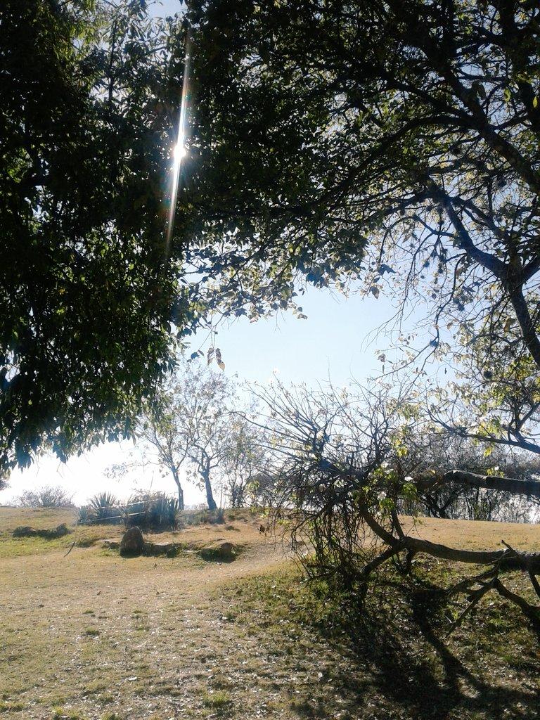 Iguanomayor's photo on #Huachicoleo