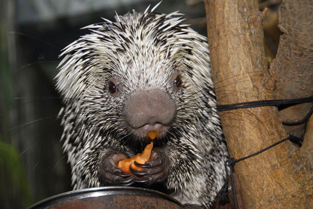 The Toronto Zoo's photo on #TypoASpecies