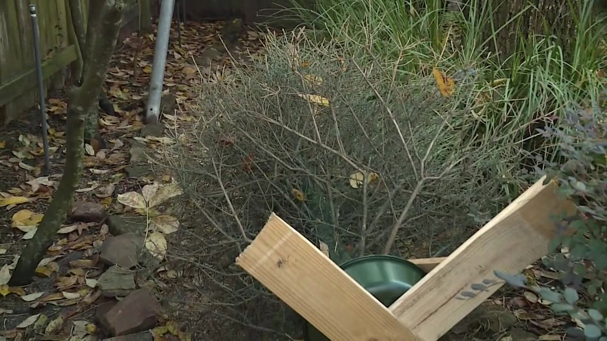 How to recycle your #Christmas tree in #Houston: https://t.co/sPSp7BJZ9C