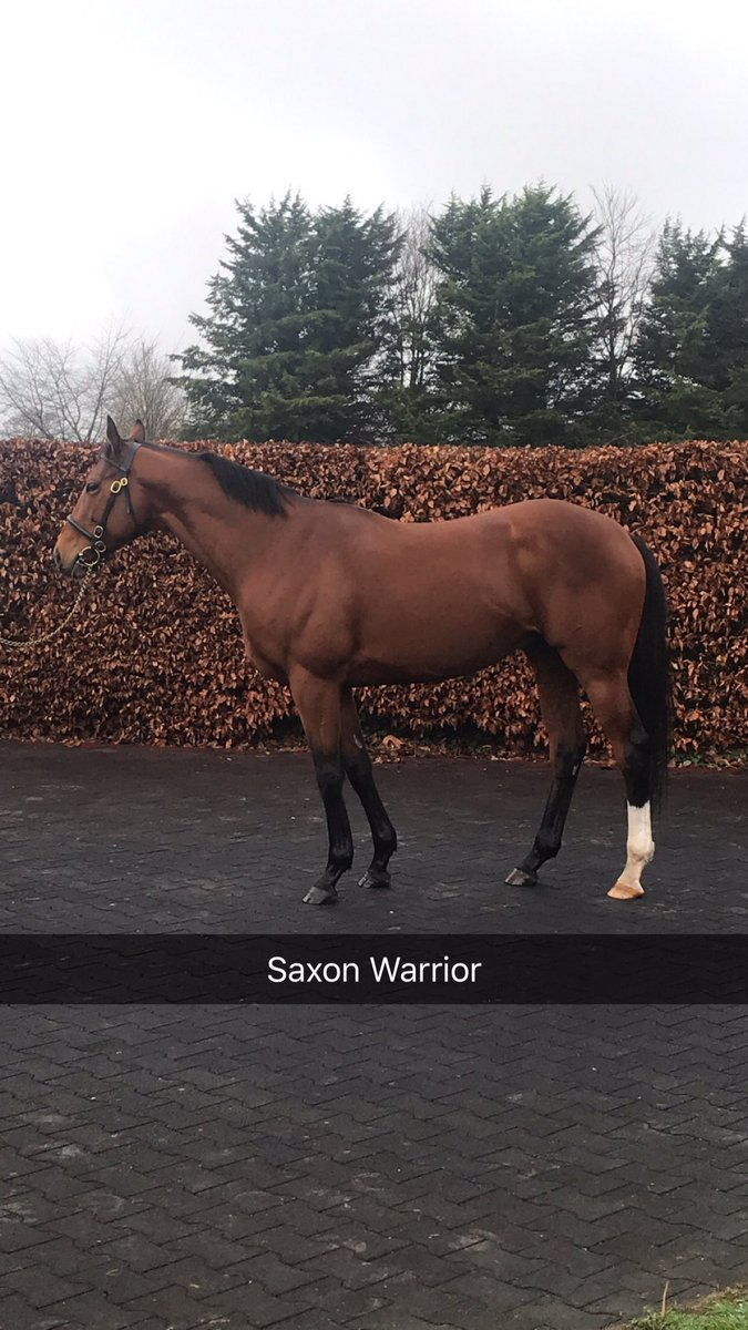 Shane McEvoy's photo on #IrishStallionTrail
