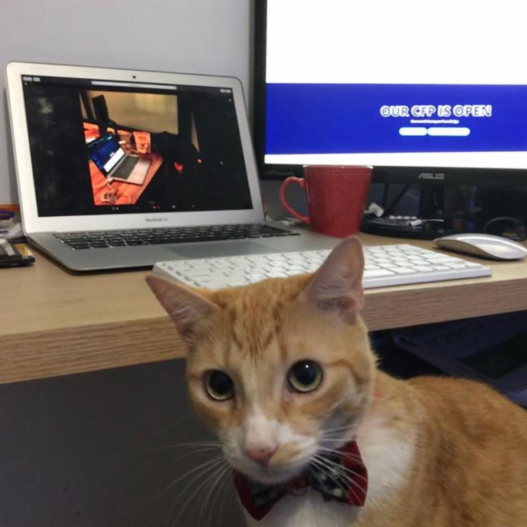 Meet Aslan - our clever organizer. Really Linus , sharing treats? How primitive. This is how it is done! Look into their eyes and make them...  BUY TICKETS NOW and savebefore prices go up at  http:// scaleconfco.com  &nbsp;  .  #catsrule #FurryFriday <br>http://pic.twitter.com/urBitGNw7h