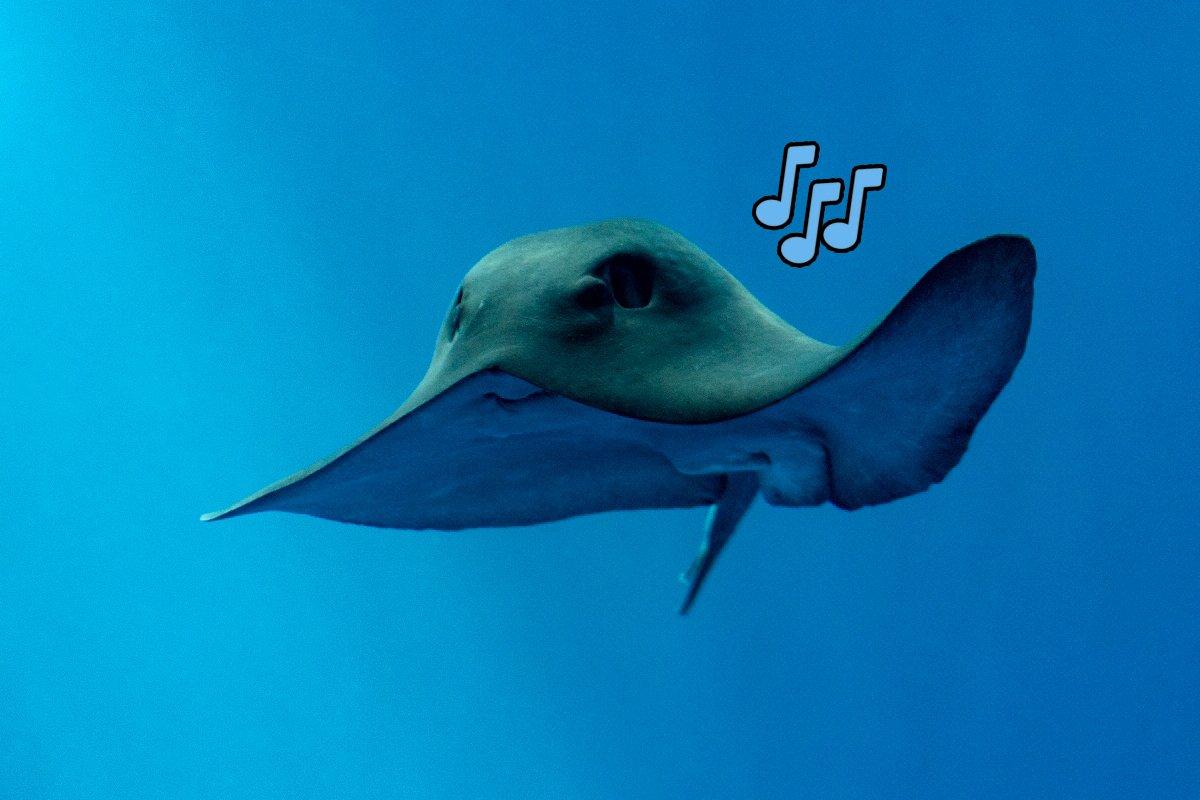 Monterey Bay Aquarium's photo on #TypoASpecies