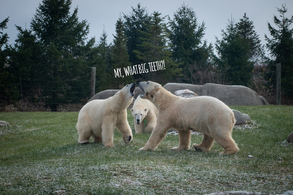 Columbus Zoo's photo on #TypoASpecies