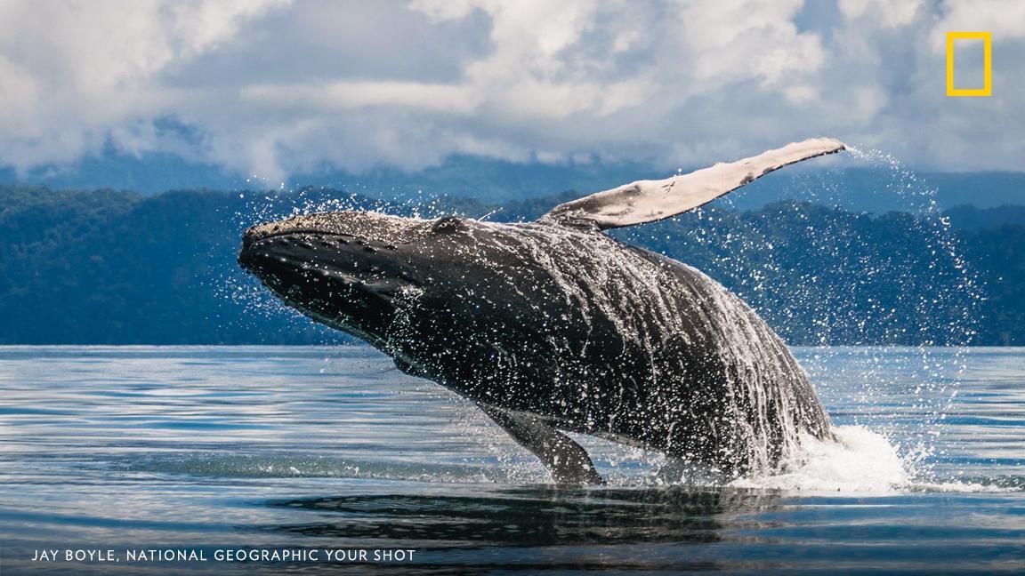 Top Shot: A Whale of a Close Encounter https://t.co/8gEhnRFSXE #YourShot