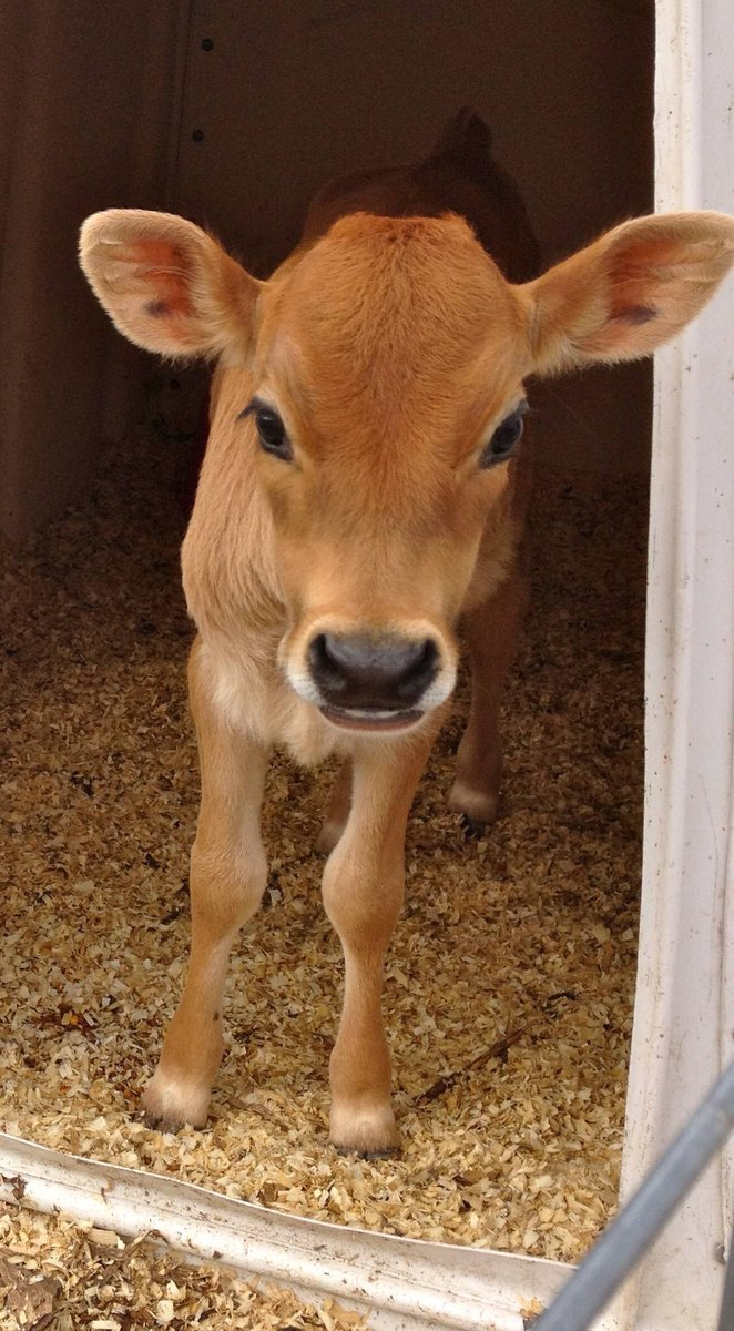 Since it's #NationalMilkDay, remember that the only beings that should consume dairy milk are these cute little guys and gals: (It's their milk, not ours) <br>http://pic.twitter.com/yYjzcKOmZQ