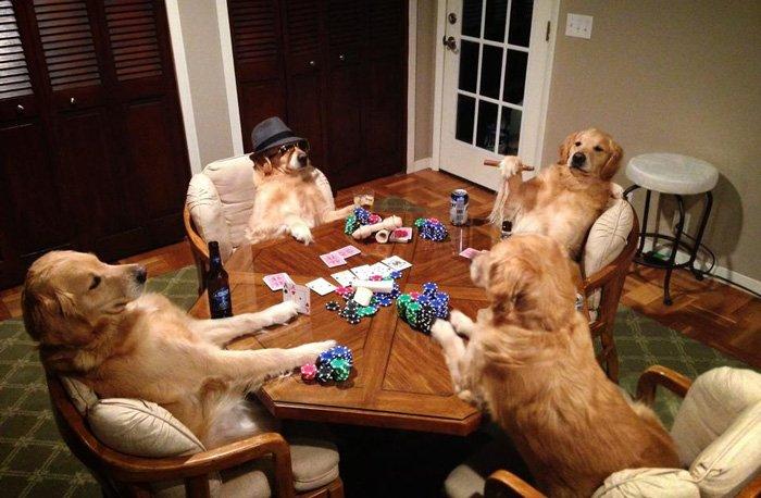 Don&#39;t forget to relax this weekend. TGIF! #dogs #Dog #puppies #puppy #dogsoftwitter #puppylove #cutedogs #mansbestfriend #ilovemydog  #pup #DogLover #doglovers #CutePuppies #CutePuppy #happydog #dogsofinstagram #cutedog #cutedogs #goldenretriever #Goldenretrievers<br>http://pic.twitter.com/k8veq2Rj4u