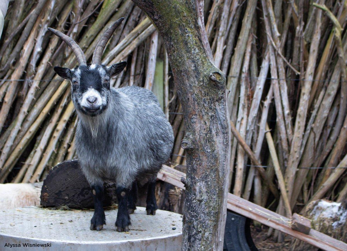 Seneca Park Zoo's photo on #TypoASpecies