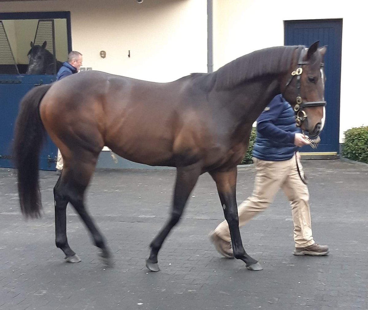 Joanna's photo on #IrishStallionTrail