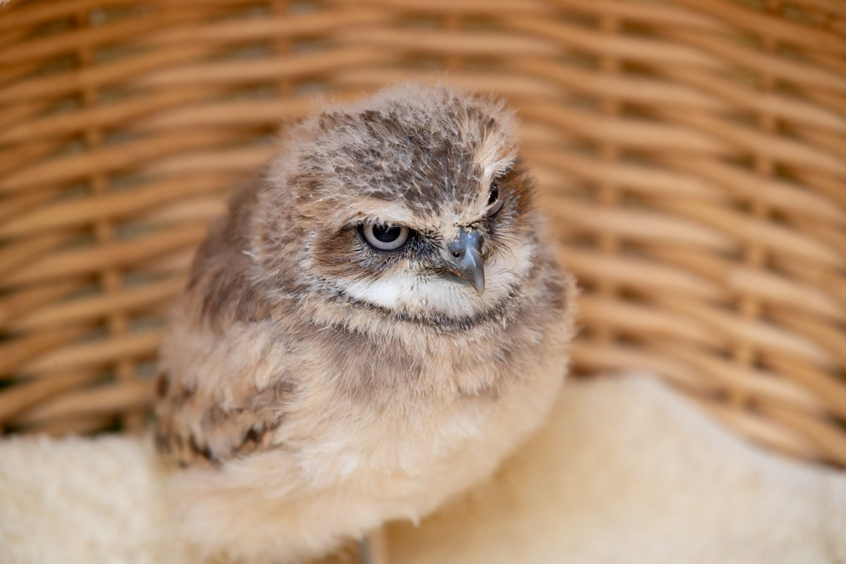 Woodland Park Zoo's photo on #TypoASpecies
