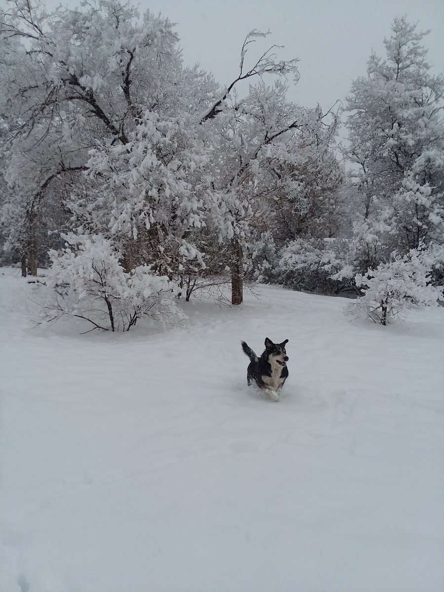 Still snowing at 5PM on the Taos Pueblo... 📸: Mary Marcus @KOB4 #nmwx