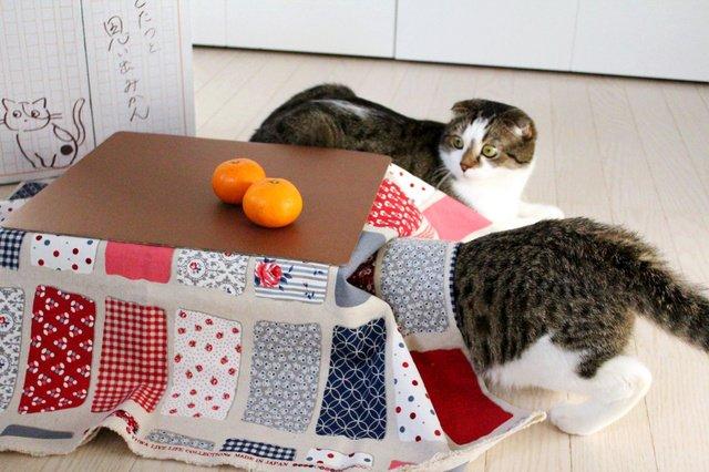 【注文殺到】和歌山県産ミカン5キロ×猫用こたつ、セット販売され話題に https://t.co/ThuK4LkvDB  「中田鶏肉店」が自社のネットショップで販売。これまでに1千箱近くが売れ、完売も近いという。