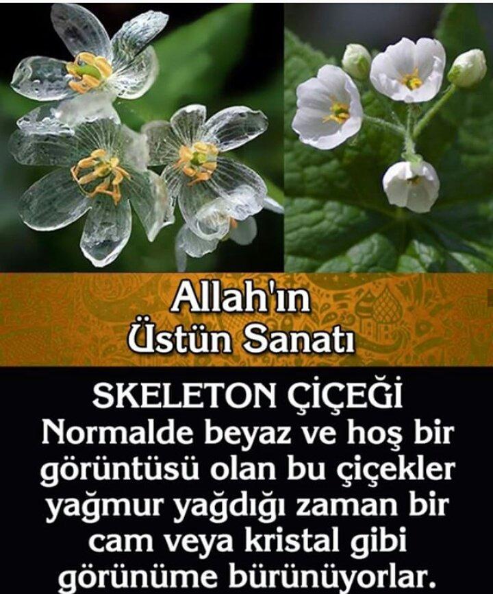 Almira's photo on #AllahınRenkSanatı