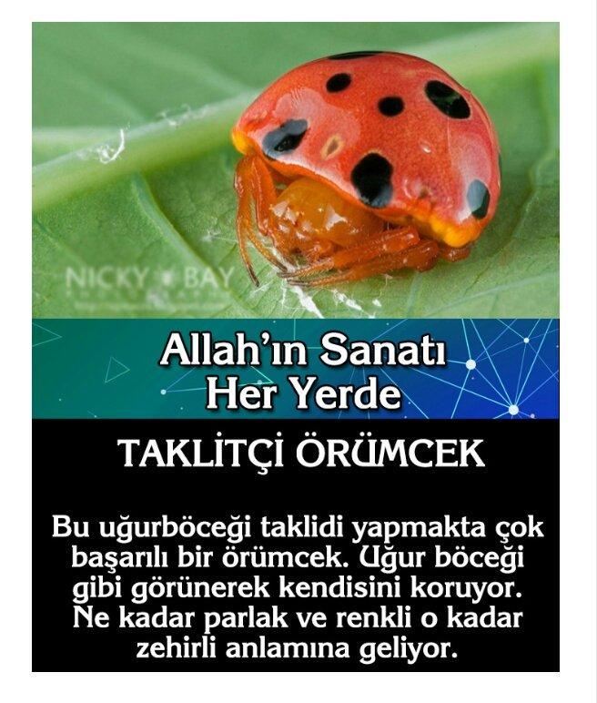Zeynep's photo on #AllahınRenkSanatı