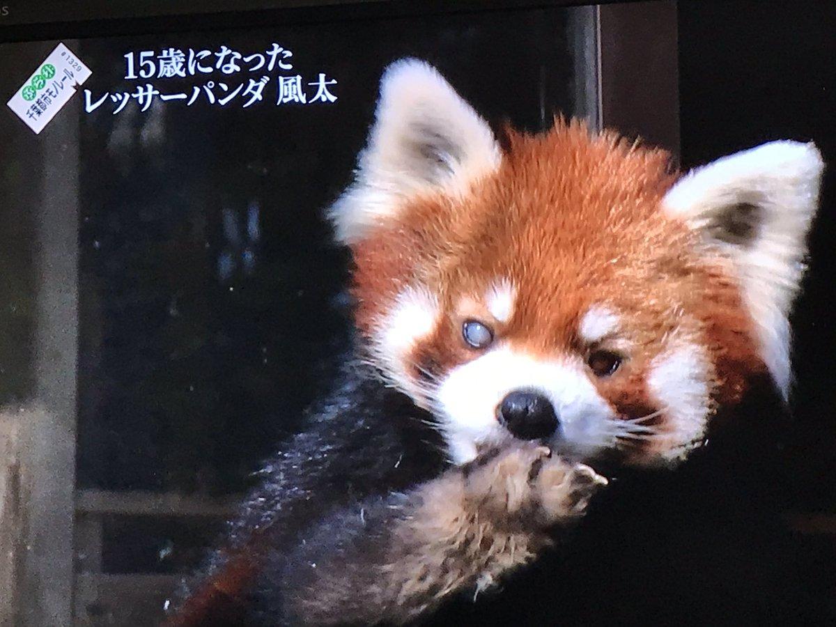 あぽろ*ちよこ's photo on 千葉都市モノレール