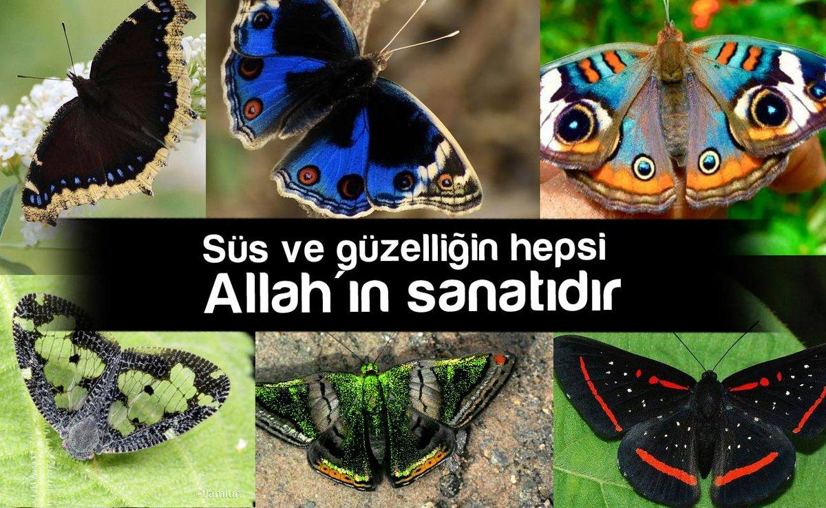 Merve Gürleyik's photo on #AllahınRenkSanatı