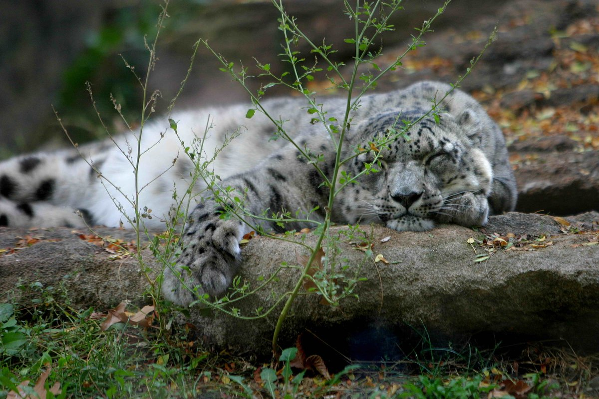 Zoo Boise's photo on #TypoASpecies