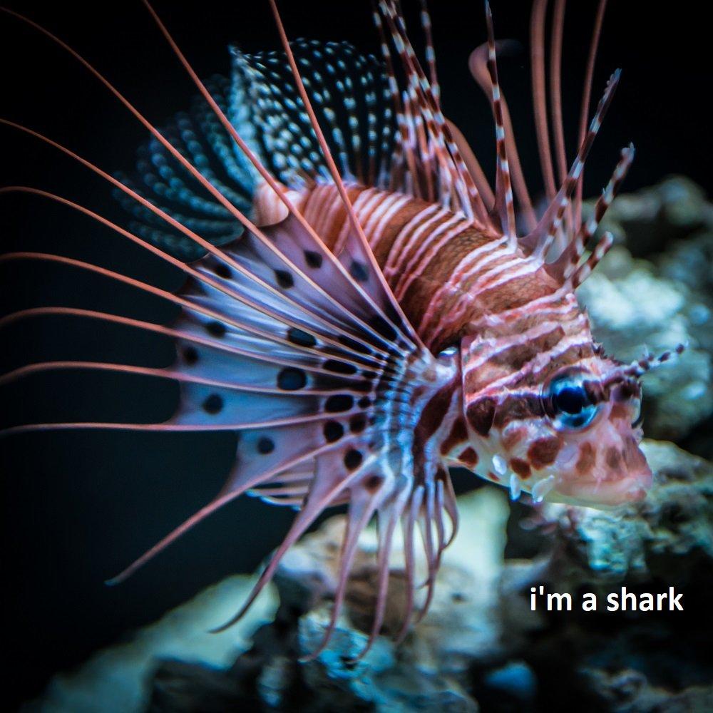 Seattle Aquarium's photo on #TypoASpecies