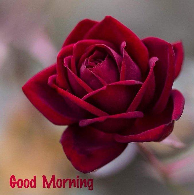 Priyanka Gandhi  Happy Birthday .Always you Be happy