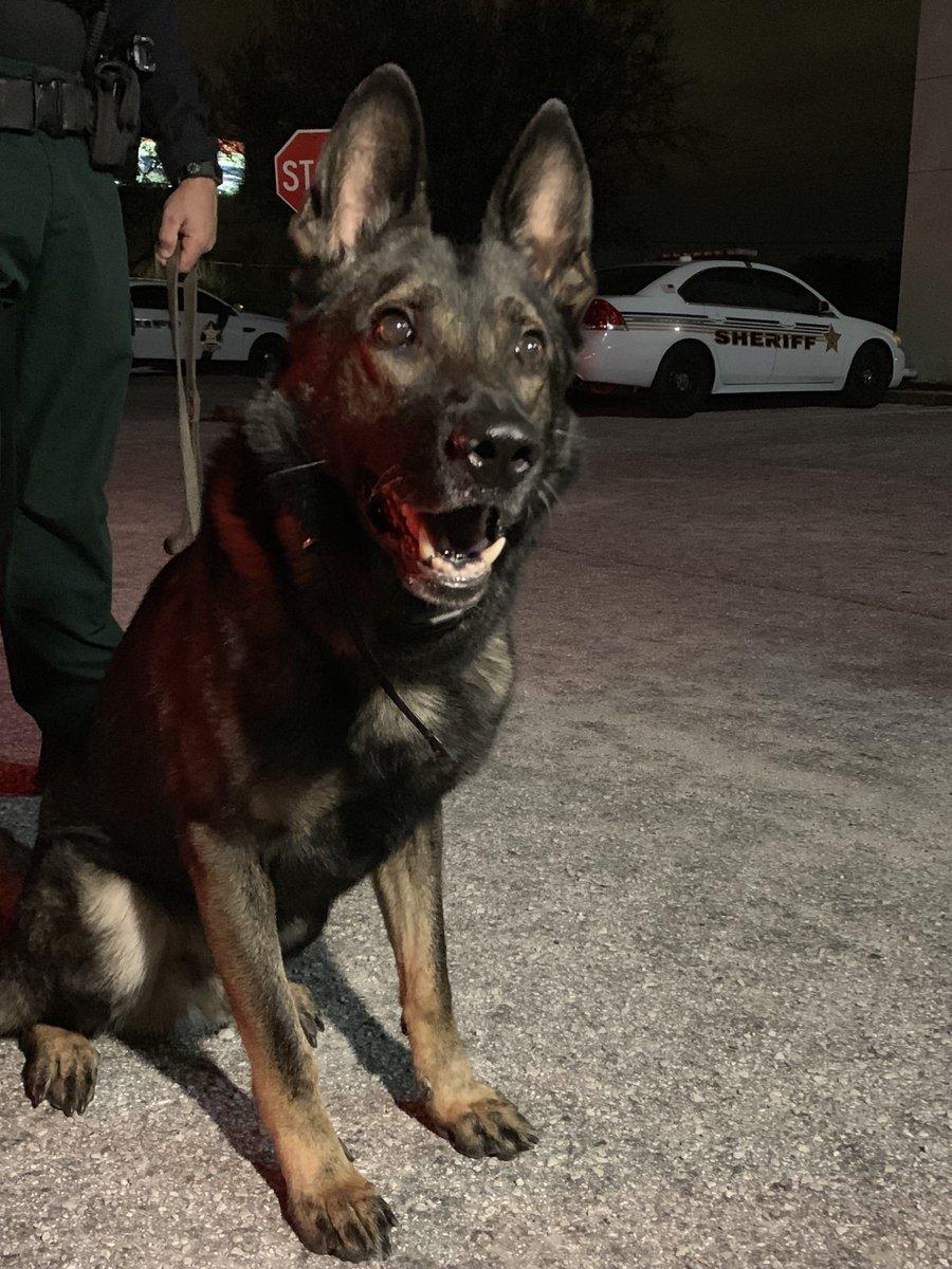 Pasco Sheriff's photo on Shep
