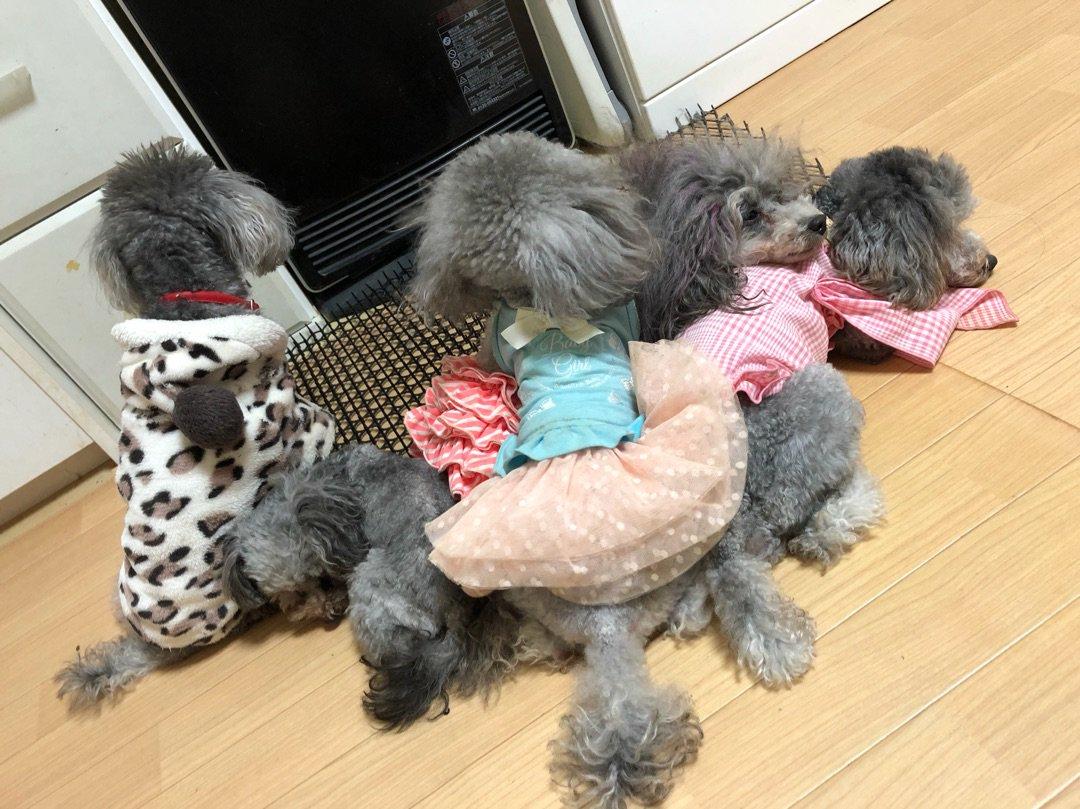 Instagram公式でフィーチャーしてもらったよ(☆w☆) ー アメブロを更新しました #犬のいる生活 ameblo.jp/yorikokoro/ent…