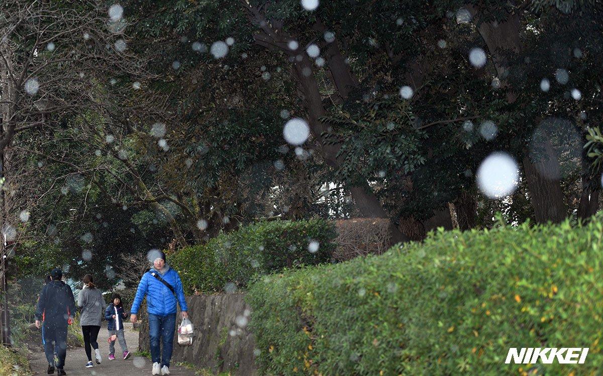 日経新聞 写真部・映像報道部's photo on 東京雪