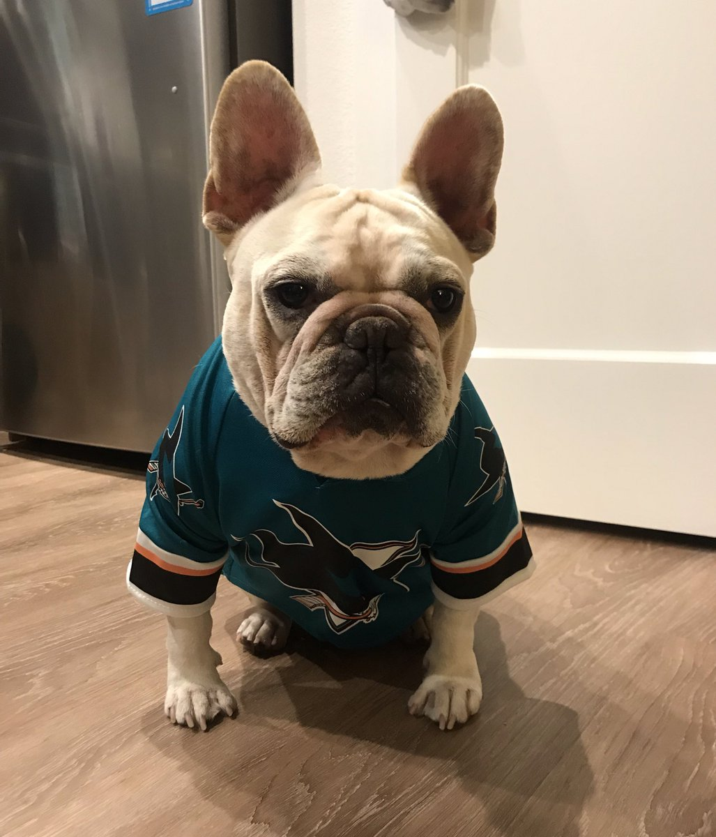 When you FINALLY find a @SanJoseSharks jersey they fits your dog. He is thrilled! #SJSharks  #SharksForLife <br>http://pic.twitter.com/agQ6WyuagR