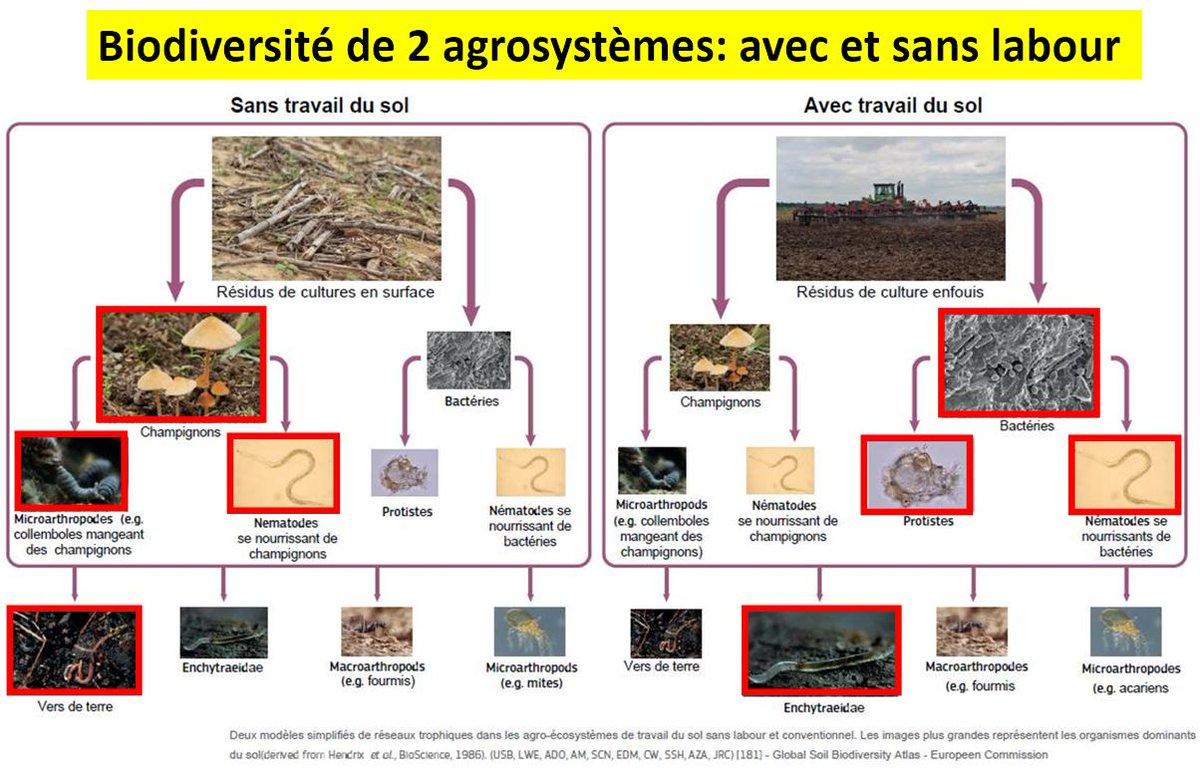 """🇫🇷 Patrick Hautefeuille Twitterren: """"🔴#Biodiversité des sols de"""