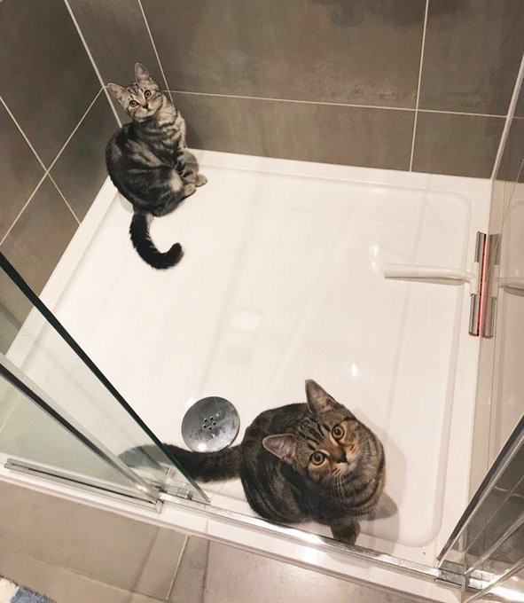 These two forever searching for water to play Happy #Caturday 😸 Photo