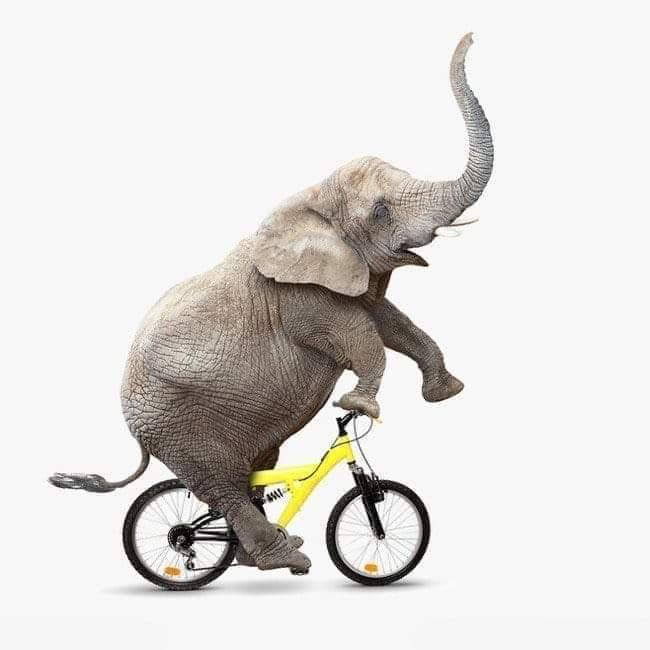 देखा है पहली बार साइकिल पर हाथी सवार !!! 😂 #SPBSPAlliance Photo