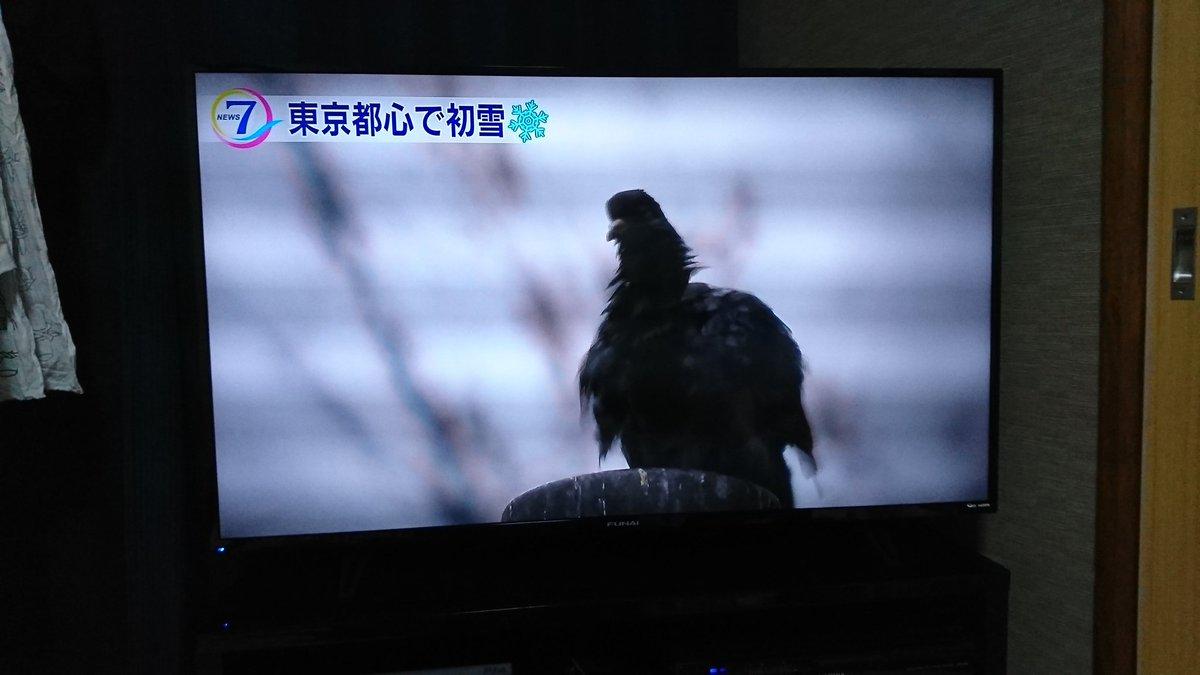 テレビ フナイ