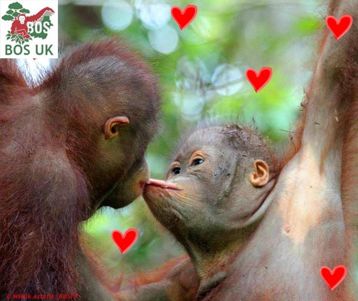 BOS UK's photo on #kissagingerday