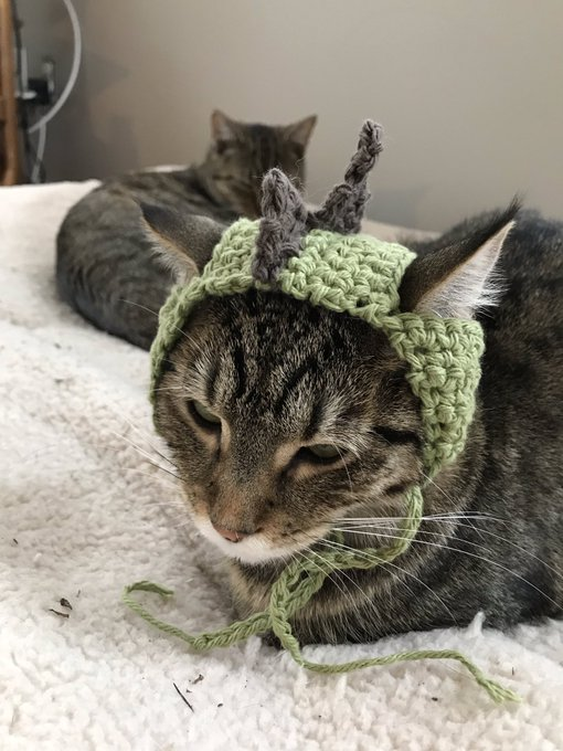 Between eating Oreos, drinking Baileys and cruising job sites last night, I crocheted a Stegosaurus cat hat. I was able to get it on both Stella (1st pic) & Harp & then Sophie started photobombing because she gets jealous. #caturday Photo