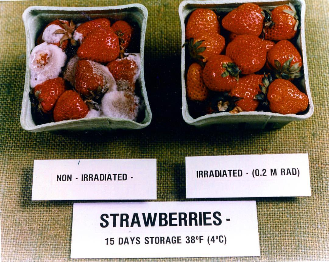 🍓 Radiation destroys disease-carrying bacteria & reduces the chances of food-borne illnesses, all while keeping the same taste, texture, and look. It also doesn't leave any sort of #radiation residues.  https://t.co/APSqiM26SH