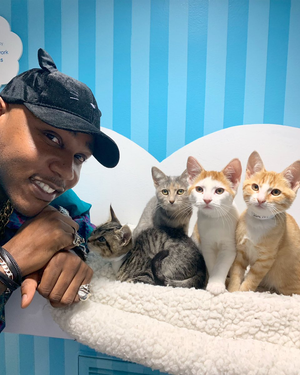 RT @iammoshow: #Its2019andWeStillCant Adopt and save all the kitties https://t.co/UwUFe7BTfD